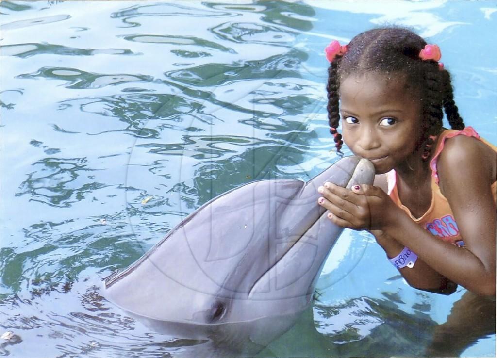 dolphin-jamaica