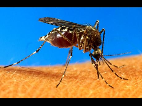 An Aedes aegypti mosquito is shown on human skin.