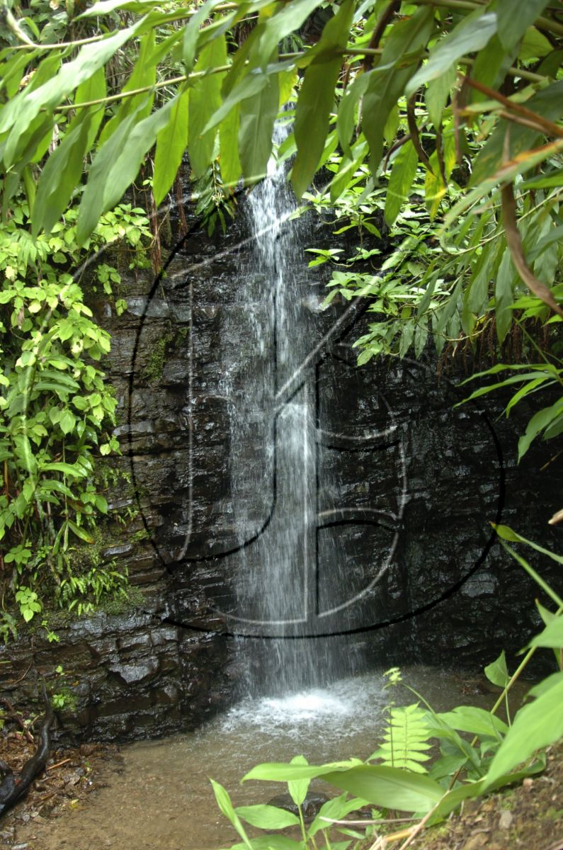 Holywell Park : Mother Nature At Its Finest —diGJamaica