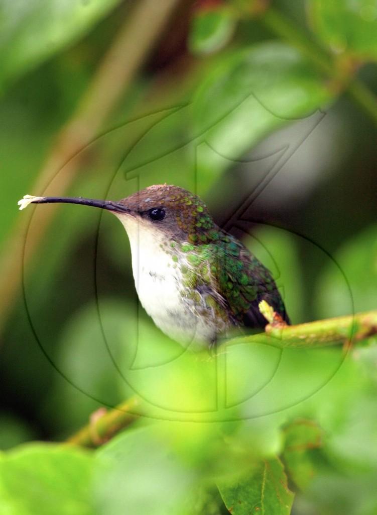 BirdwatchingB20091210RM