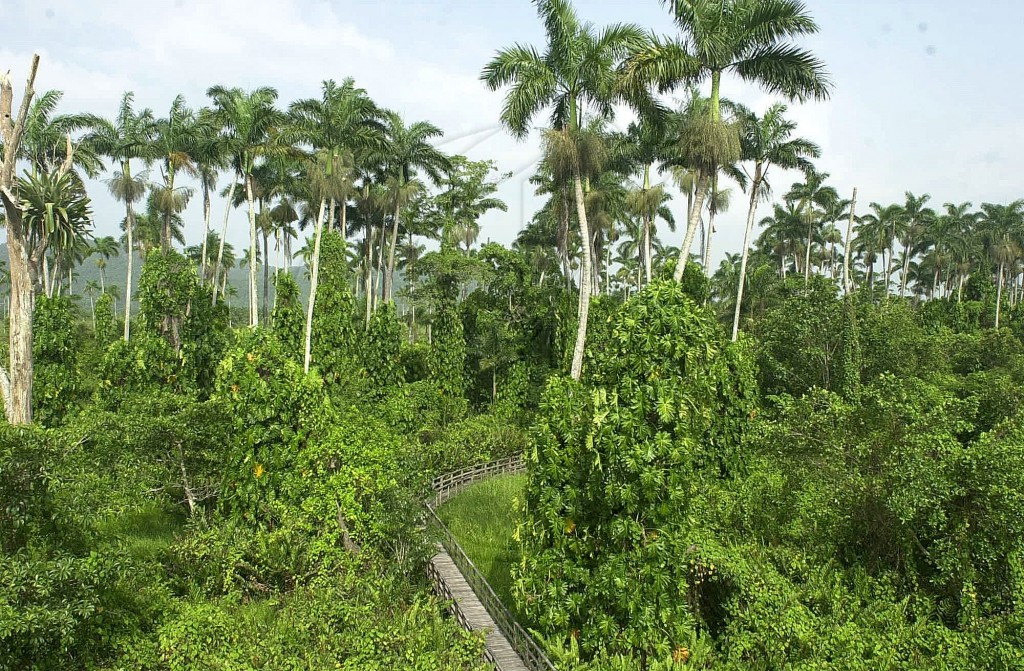 The Royal Palm Reserves