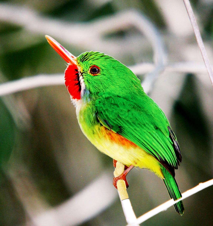 Birds And Religion In Jamaica Digjamaica